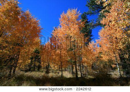 Fall colors near Lake Tahoe