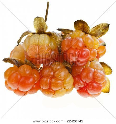 fresh cloudberry ( Rubus chamaemorus) isolated on white