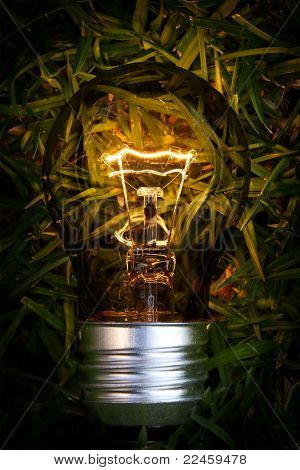 Bombilla de luz