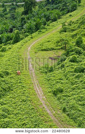 Green road beside the hill