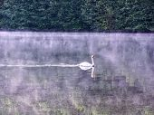 Swan On The Moselle River Reflecting Trees Of Water Sunset Near Toul France Campground With Mist On  poster