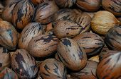 stock photo of pecan tree  - A bunch of pecans in a bucket - JPG