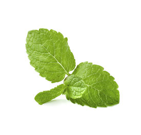 stock photo of mint leaf  -  Mint leaves isolated on white - JPG