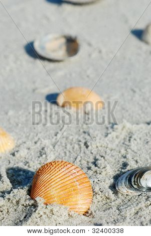 Shells Along the Beach