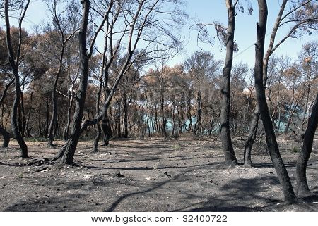 Arid Forest Detail