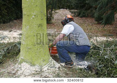Lumberman At Work