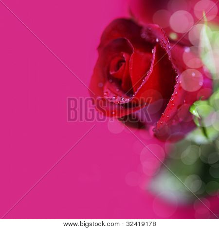 beautiful red rose on red background