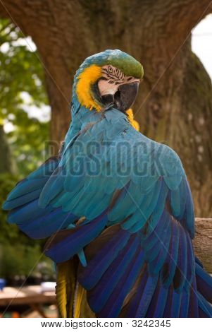 A talking Macaw called Rodney poses for