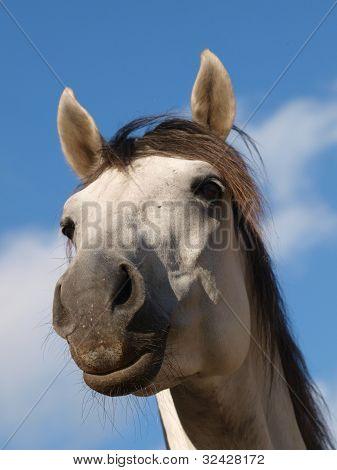 Grey Horse Against Blue Sky