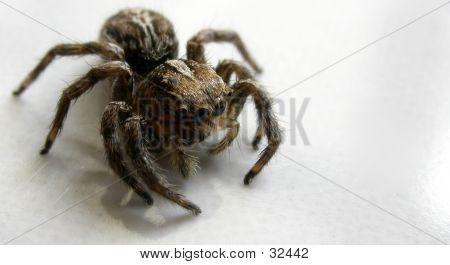 Spider Macro Shot