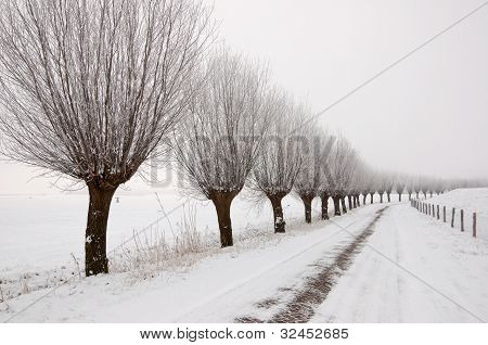 Misty Winter Landscape In The Netherlands With A Row Of Pollard Willows.