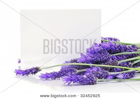 lavender flowers with a blank paper label on a white background