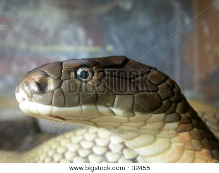 Macro Snake Head
