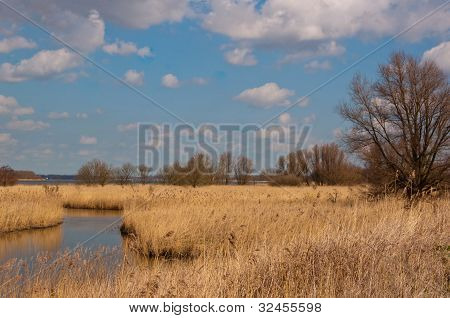 Colorful Landscape Wih A Creek And Reeds