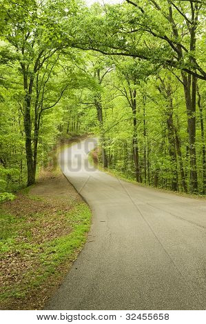 Curved road in forest.