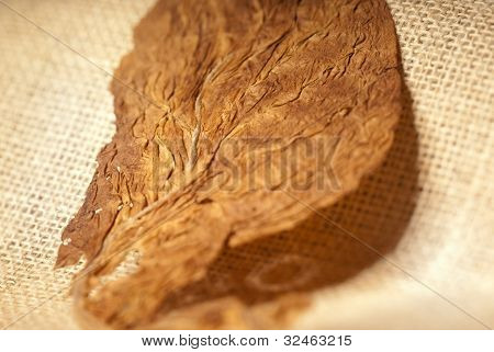 Tobacco Macro