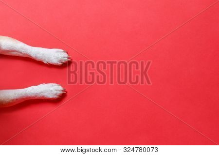 poster of Above, Animal, Background, Banner, Canine, Christmas, Claw, Closeup, Copy, Copy Space, Design, Dog,