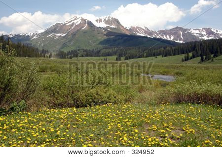 Flowers, Meadow, Mountain