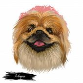 Pekingese Dog Portrait Isolated. Digital Art For Web, T-shirt Print And Puppy Food Cover Design, Cli poster