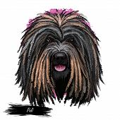 Puli Dog Portrait Isolated On White. Digital Art Illustration Of Hand Drawn Dog Web, T-shirt Print A poster