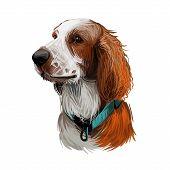 Welsh Springer Or Cocker Spaniel Dog Breed Portrait Isolated On White. Digital Art Illustration, Ani poster