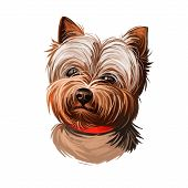 Yorkshire Terrier Dog Breed Portrait Isolated On White. Digital Art Illustration, Animal Watercolor  poster
