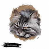 Kurilian Bobtail Kitten Isolated On White Background. Digital Art Illustration Of Hand Drawn Little  poster