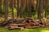 A Pile Of Firewood In The Forest. Firewood In A Forest Glade. Firewood Recycling. Deforestation, Fel poster