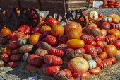 A Rustic Autumn Still Life With Pumpkins , Large Different Pumpkins, Different Varieties Of Pumpkins poster
