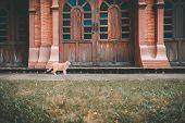 Orange Cat Tabby Feline Standing On Floor In Park poster