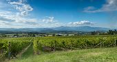 View Of The Yarra Valley, Near Melbourne, Australia