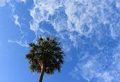 Постер, плакат: Тропические пальмы на синее небо