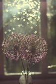 Wild Onions In A Glass Vase On The Window.  Wild Leek At Sunset. Wild Onions Bouquet poster