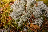 Autumn Moss And Lichen In The Forest. Autumn Forest Green Moss Top View. Forest Moss Background poster