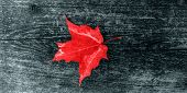 Canada Day Maple Leaves Background. Symbol Picture For Canada Day 1st July. Happy Canada Day Real Ma poster