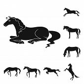 Vector Illustration Of Fauna And Mare Icon. Collection Of Fauna And Stallion Stock Symbol For Web. poster