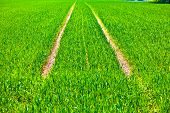 image of veer  - marks of wheels in green field in springtime - JPG