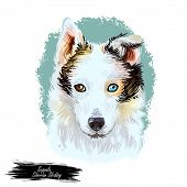 Seppala Siberian Sleddog Sleeping Dog Digital Art. Watercolor Portrait Of Purebred Domestic Animal L poster
