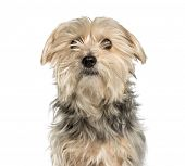 Mixed-breed dog against white background poster