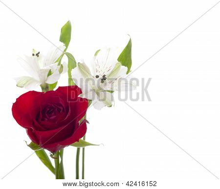 Red Rose With White Flower