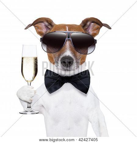 Cão de felicidades