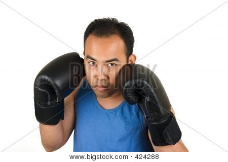 Boxer 1