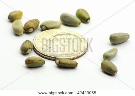 Artichoke Seeds with Dime