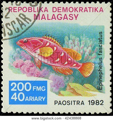 Malagasy - Circa 1982:stamp Shows Image Of A Epinephelus Fasciatus, Circa 1982