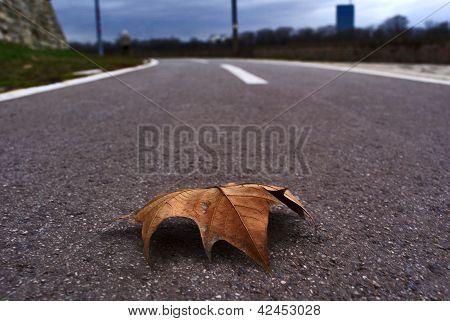 Leaf on the road