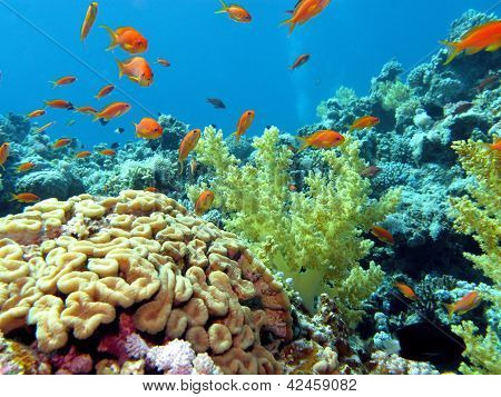 coral reef with brain and soft corals at the bottom of tropical sea