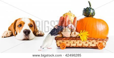 The Dog Observes As A Rat Takes Away Products