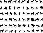 image of german shepherd dogs  - Big collection vector silhouettes of dogs with breeds description - JPG