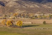 farmland at foothills of Rocky Mountains at Belvue near Fort Collins, Colorado; fall scenery at sunr