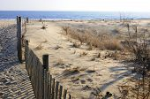 picture of sea oats  - Beach erosion fence along sea shore at Cape Henlopen State Park - JPG